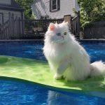 Котенце вижда, че братчето му е на ръба на басейна… ВИЖТЕ какво става след това! (ВИДЕО)