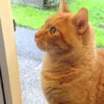 Котарак, който звъни на звънеца пред вратата? ИМА такова животно (ВИДЕО)