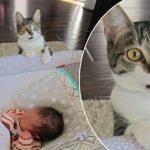 Котки и кучета срещат бебета за пръв път… вижте ОЧАРОВАТЕЛНИТЕ им реакции!
