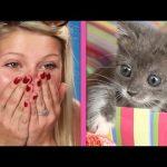 ИЗНЕНАДА! Кутия, пълна с малки котета и НЕВЕРОЯТНИТЕ реакции на хората (ВИДЕО)