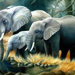 Малко МЪДРОСТ! Притча за мравката и слона!