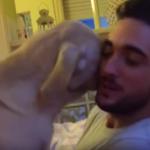 Това куче знае, че е сгафило. ВИЖТЕ как то ИСКА ПРОШКА от своя стопанин! ОЧАРОВАТЕЛНО! (ВИДЕО)