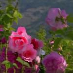 Германска телевизия засне филм за България. ВИЖТЕ колко прекрасна е България в техните очи!