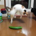 УНИКАЛЕН смях! Тези котки изпадат в УЖАС, когато видят краставици! (ВИДЕО)