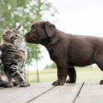 Котки срещат малки кученца за пръв път! Вижте колко са очарователни! (ВИДЕО)