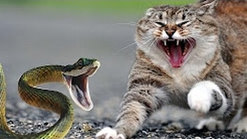 Най-безстрашните котки (ВИДЕО)