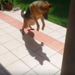 Това куче за първи път забелязва сянката си. Ще се скъсате от СМЯХ какво следва! (ВИДЕО)