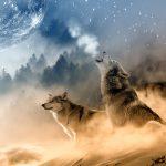 Притча за двата вълка! Ще я прочетеш за 20 секунди, но ще я запомниш завинаги!