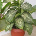ВНИМАНИЕ: Това растение може да убие дете за по-малко от 60 секунди, а възрастен: за 15 минути
