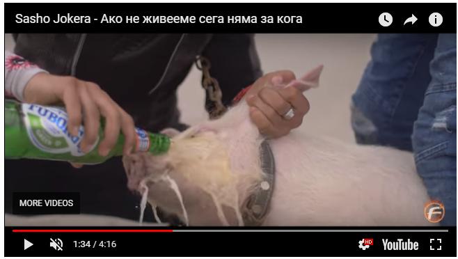 ИЗРОД! Чалга певец уби прасе, след като налива бира в устата му във видеоклип (ВИДЕО 18+)