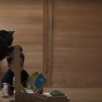 Вижте как тази котка учи малкото бебе да ходи. Просто сърцето ви ще се стопли! (ВИДЕО)