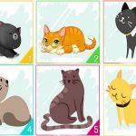 Тест: Изберете си коте и вижте какво казва това за вашата личност