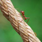 Имате мравки в дома си? Тези евтини неща ще ви избавят от тях
