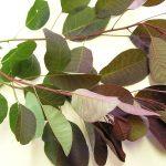 Най-силната българска билка, която лекува около сто болести