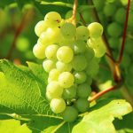 Маски за лице с грозде, които ще свършат чудеса за кожата ви