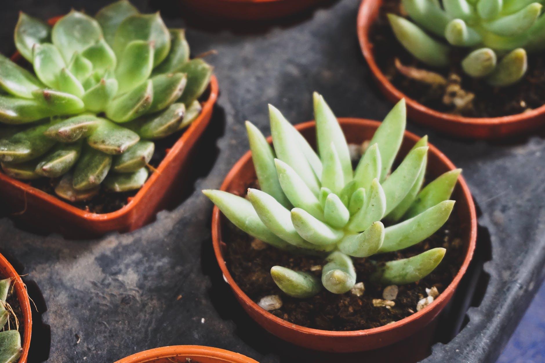ИЗУМИТЕЛНО: С помощта на това растение можете да възстановите зрението си
