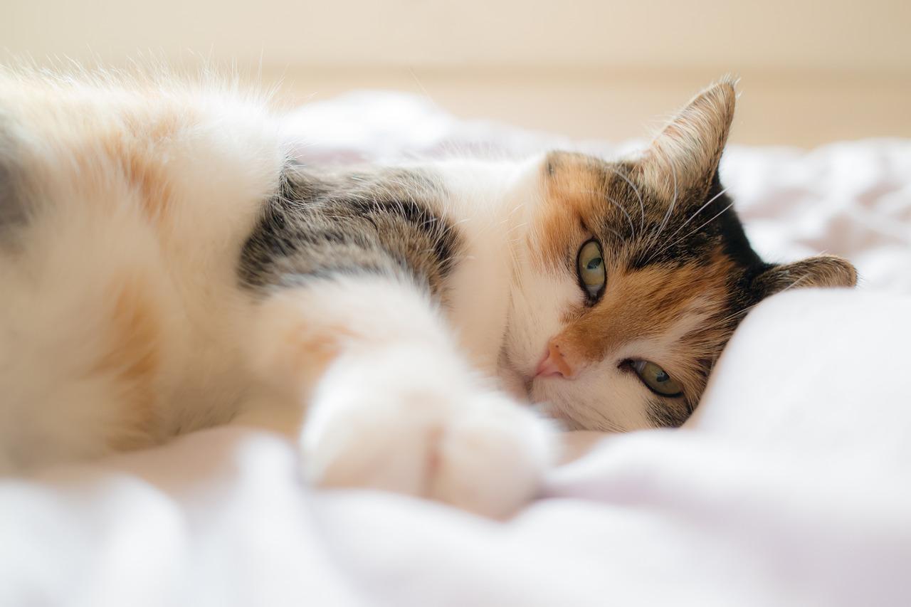 Невероятните ползи от това да имаш котка