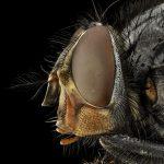 Домашна смес срещу мухи и хлебарки