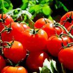 Подхранване на домати в градината – ето как да го сторим