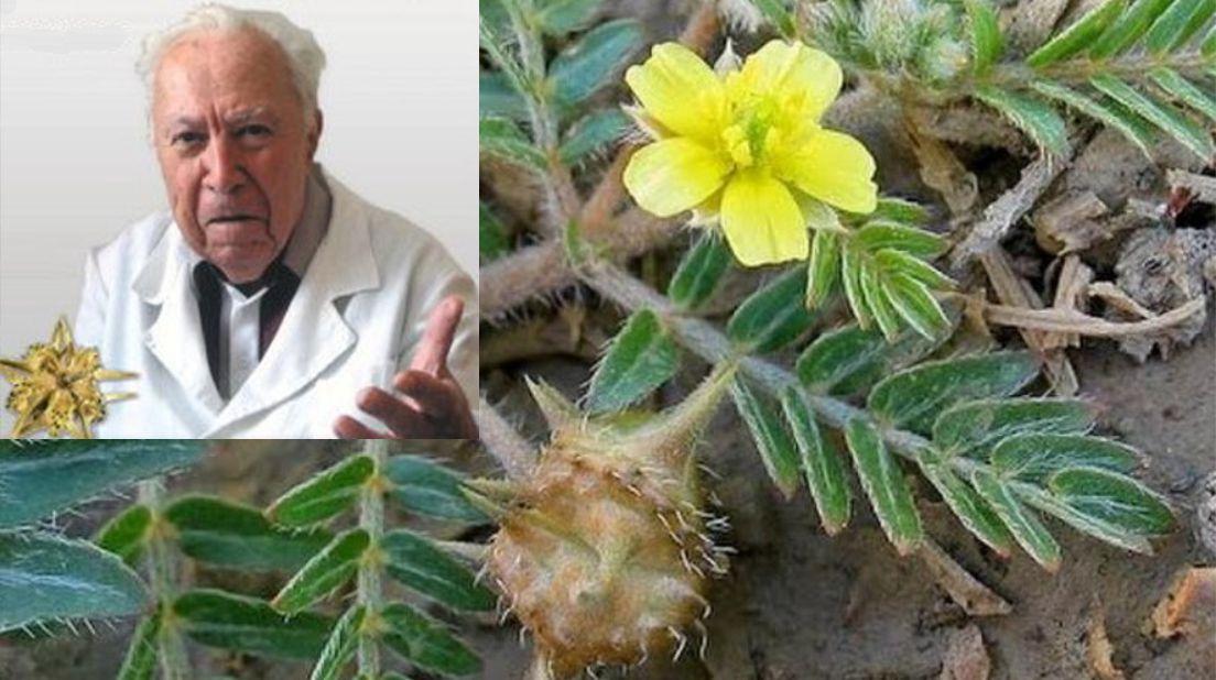 Рецептата на лечителя Борис Николов за здраво сърце